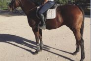 Quiet and Easy Riding Mare on HorseYard.com.au