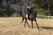 Handsome TB Gelding on HorseYard.com.au