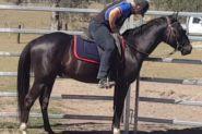 Black Smoke on HorseYard.com.au
