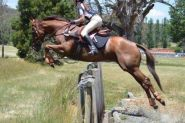 Great teenagers mount on HorseYard.com.au