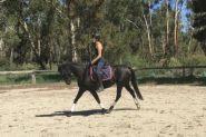 Mirinda Midnight Mink - ARP Mare  on HorseYard.com.au