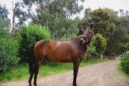 Elegant and quiet  on HorseYard.com.au