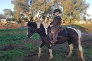 Stunning black Tobiano  on HorseYard.com.au
