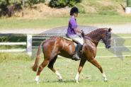 Blingy chestnut mare on HorseYard.com.au
