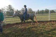 Welsh x qh Grey gelding  on HorseYard.com.au