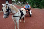 Harness pony and cart on HorseYard.com.au