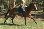 STUNNING MARE on HorseYard.com.au