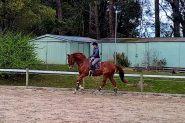Big Bold and Blingy on HorseYard.com.au