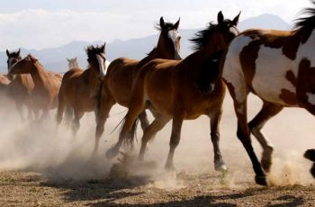 ASPCA Welcomes New Jersey Ban on Horse Slaughter