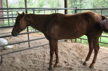 Psychology Of Equine Performance And The Biology Behind Laminitis