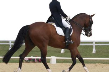 Should You Ever Punish Your Horse?