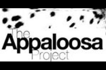 Progress In Identifying The Genetics Of Appaloosa Spotting