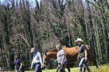Horses Find Trust Again In Kinglake