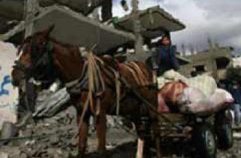 Emergency Help For Gaza's Vital Working Animals