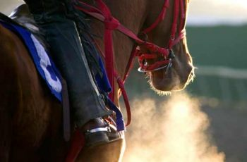 Second Horse Killed On Adelaide Streets