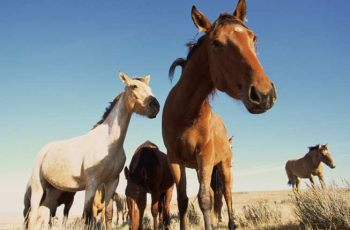 Australian Horse Owners Have Ten Days To Decide Their Future