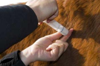 Equine Influenza Decision Unjustified