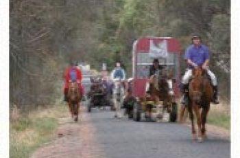 Rainbow Rider's Horses Died In Crash